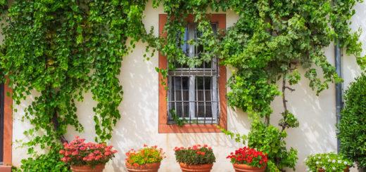 spanische kletterpflanzen im überblick