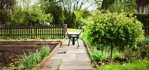 pachtvertrag kleingarten