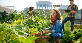 Das Hobby zum Beruf machen: Mithilfe eines Businessplans zum professionellen Gärtner