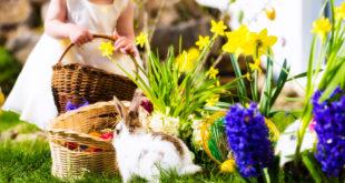 Besondere Präsente zu Ostern: Alpine Geschenkkörbe im Garten verstecken