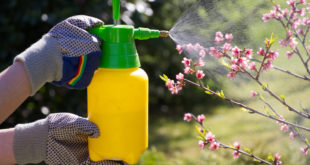 Ungeziefer im Garten: Wirksame Mittel gegen Ohrenkneifer, Silberfische & Co.