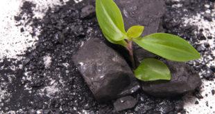 Pflanzenkohle für den Garten: Die schwarze Erde der Indios