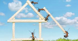Ameisen im Haus bekämpfen: Darauf sollte man achten