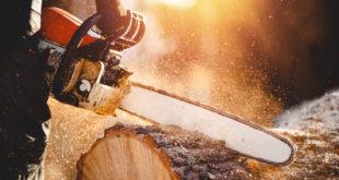 Kettensägen: Kaufberatung und Tipps für Anfänger