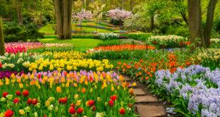 Offene Gärten Berlin-Brandenburg: Das beliebte Gartenevent