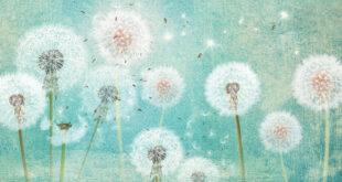 Fototapeten mit Pusteblumen: Zauberhafte Wanddekoration